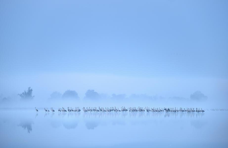Стая журавлей на туманном озере, © Петр Чара<br> Серебро, Фотоконкурс «Птичий фотограф года»