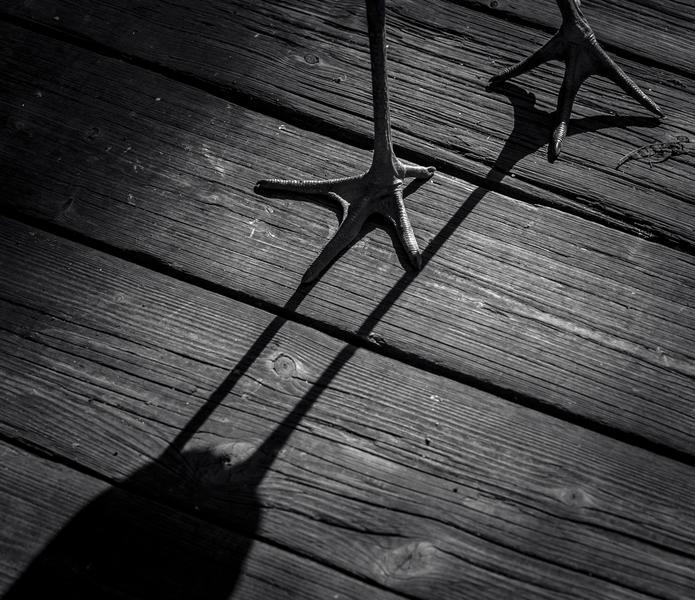 Лапы аиста, © Магдалена Стракова, Фотоконкурс «Птичий фотограф года»