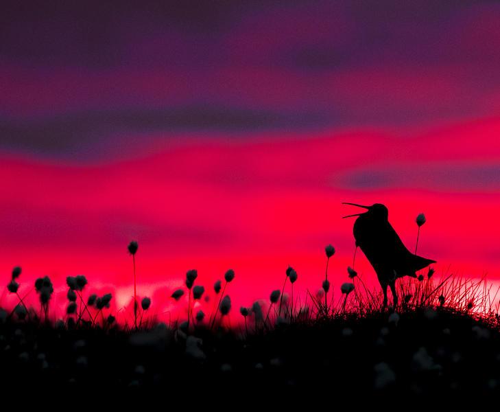 Силуэт дупеля, © Торстен Грин-Петерсен, Фотоконкурс «Птичий фотограф года»