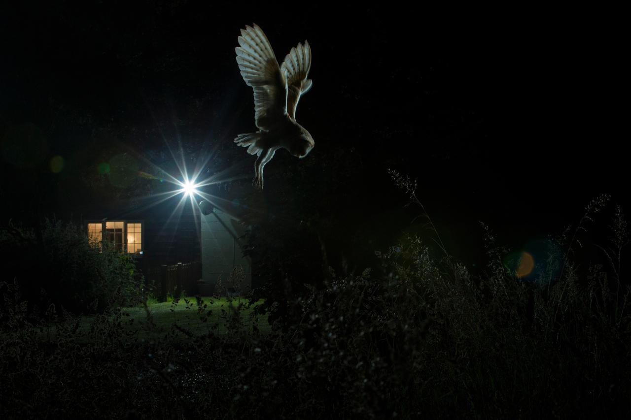 Сова вблизи сарая, © Джейми Холл<br> Золото, Фотоконкурс «Птичий фотограф года»
