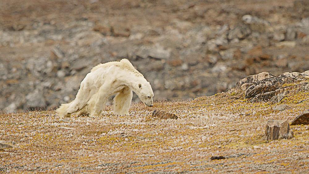 Лицо изменения климата, © Пол Никлен / SeaLegacy / ZUMA Press, 1 место в категории «Новости», Фотоконкурс Prix de la Photographie Paris