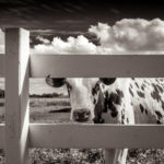 Мемуар Среднего Запада, © Майкл Кнапштейн, Миддлтон, Висконсин, США, Категория «Путешествие», Фотоконкурс «Художественная фотография» — Fine Art