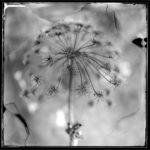 Без названия, © Питер Элевельд, Олст, Нидерланды, Категория «Натюрморт», Фотоконкурс «Художественная фотография» — Fine Art