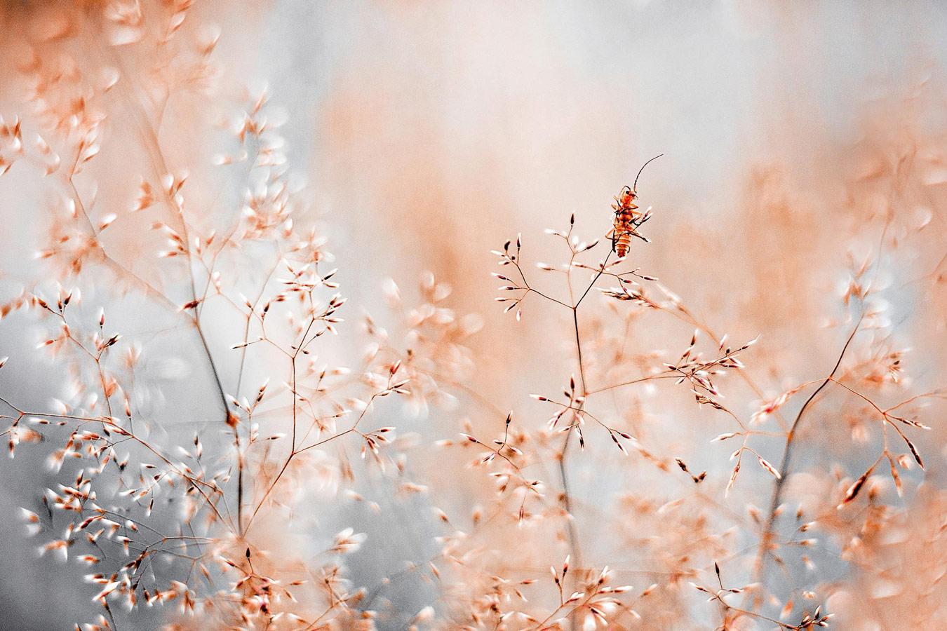 Один, © Кристина Звинакевичюте, Абсолютный победитель конкурса, Победитель категории «Сад дикой природы», Фотоконкурс RHS Photographic