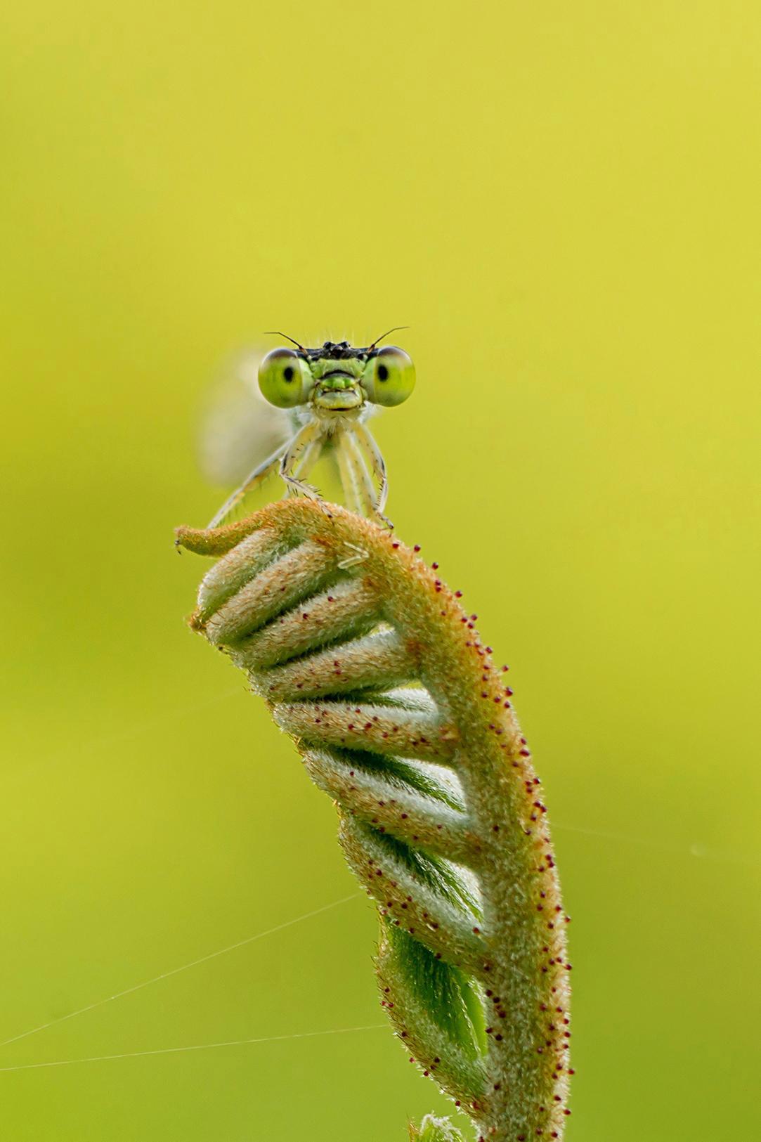 Прекрасная стрекоза в саду, © Приянк Дхами, 3 место в категории «Сад дикой природы», Фотоконкурс RHS Photographic