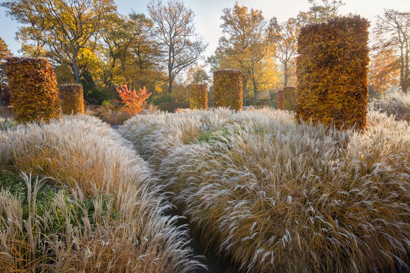 Мягкие оттенки осени в саду Вислей, © Марианна Мажерус, Победитель категории «Праздник садов», Фотоконкурс RHS Photographic