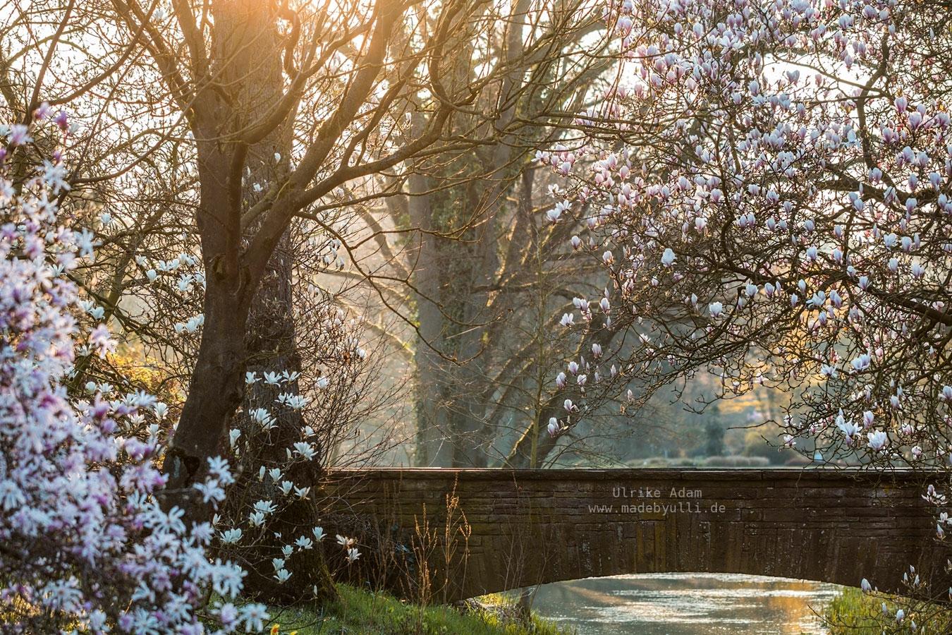 Рододендрон-парк Бремен, Германия, © Ульрике Адам, 3 место в категории «Праздник садов», Фотоконкурс RHS Photographic