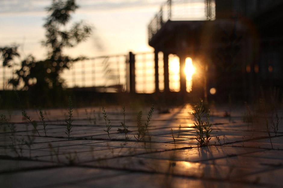 Через бетон к солнцу, © Анна Марко, Победитель категории «Городское садоводство», Фотоконкурс RHS Photographic