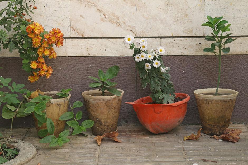 Особенный горшок, © Мехди Бабади, 3 место в категории «Городское садоводство», Фотоконкурс RHS Photographic
