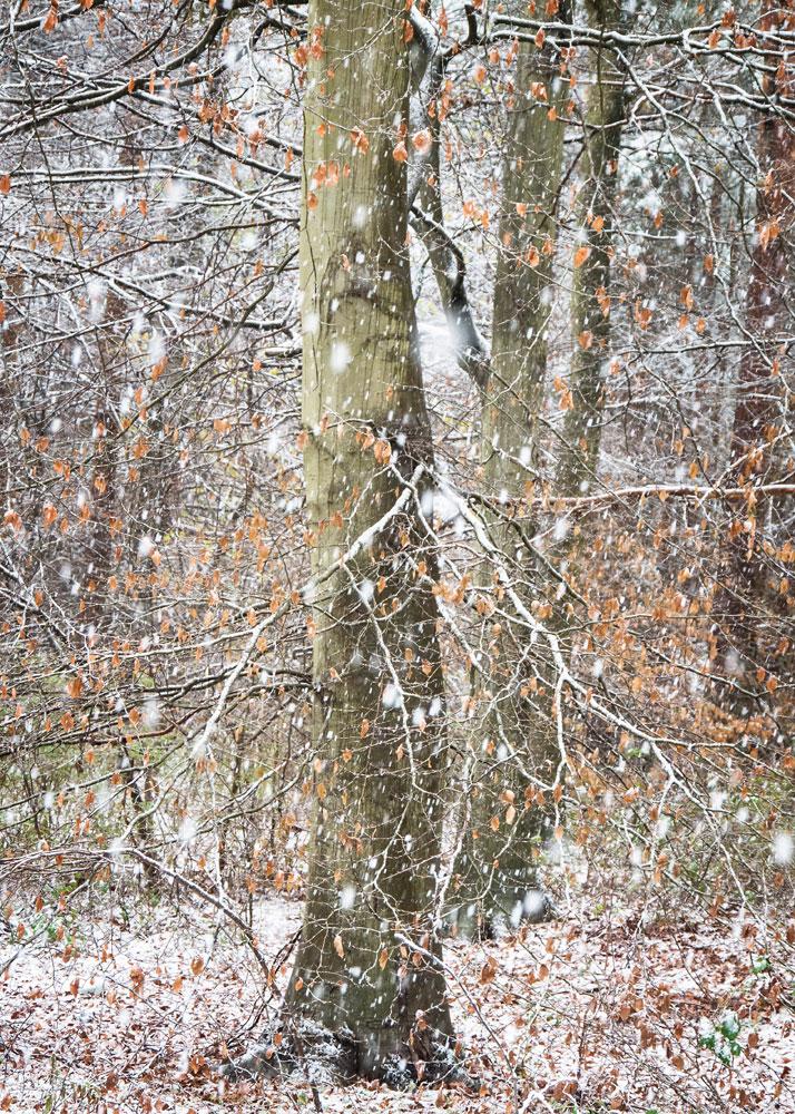 Снегопад, © Паула Купер, Победитель категории «Социальные сети», Фотоконкурс RHS Photographic
