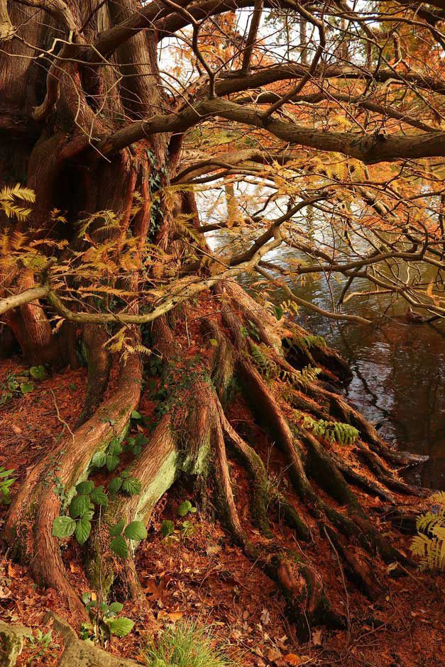 Скрытые глубины, © Хелен Джейн Кук, 2 место в категории «Социальные сети», Фотоконкурс RHS Photographic
