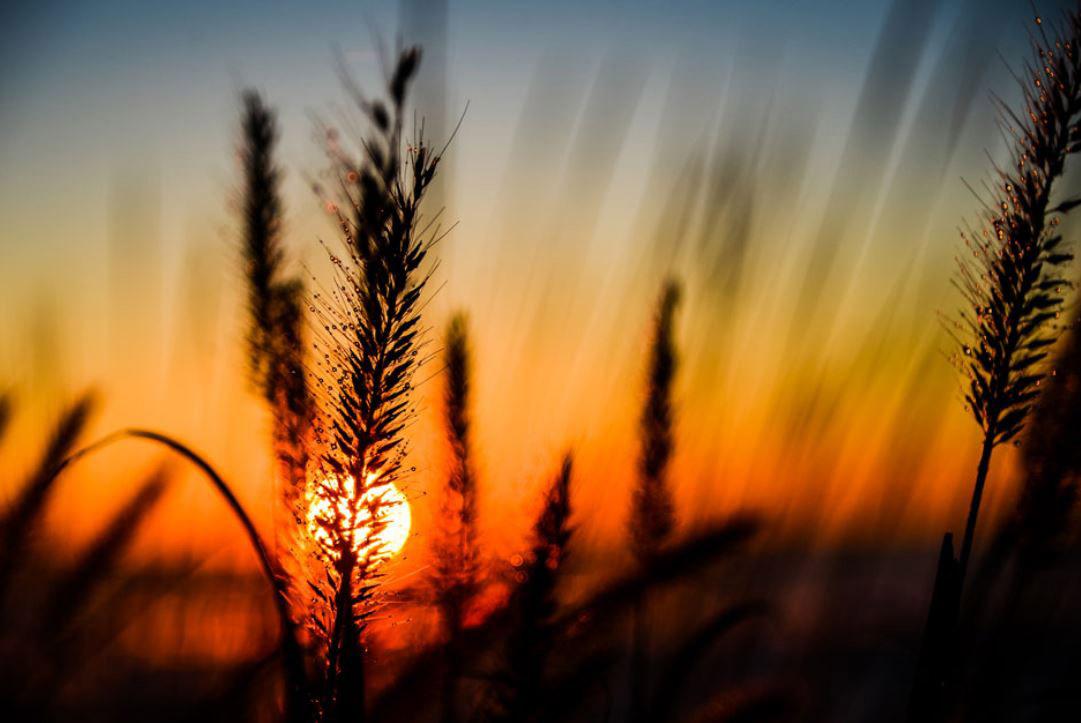 Как меняются цвета при заходе солнца, © Мадхура Тильве, Победитель категории «Юный фотограф до 18 лет (11–17)», Фотоконкурс RHS Photographic
