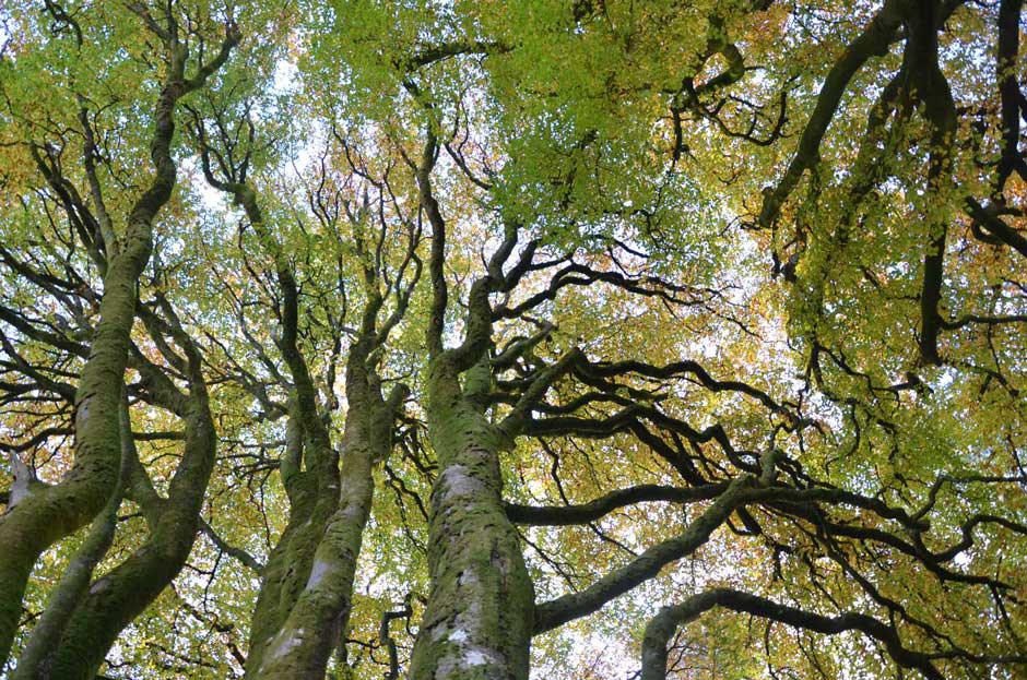 Скрученный лес, © Поппи Ченнеллс, 3 место в категории «Юный фотограф до 18 лет (11–17)», Фотоконкурс RHS Photographic