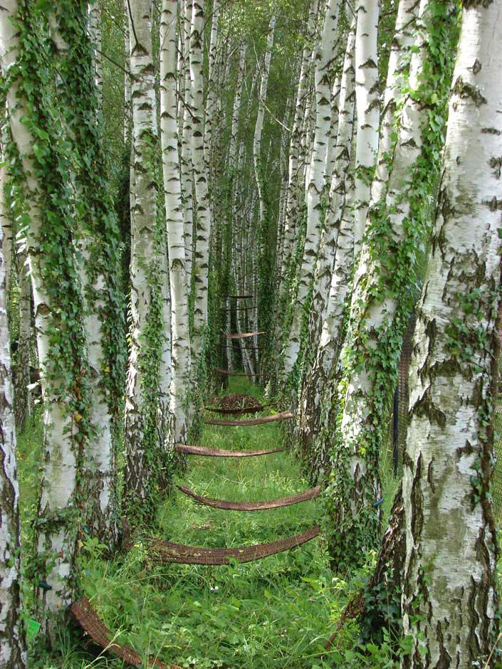 Плетёная лестница, © Эмилия Низанковская, 2 место в категории «Юный фотограф до 11 лет», Фотоконкурс RHS Photographic