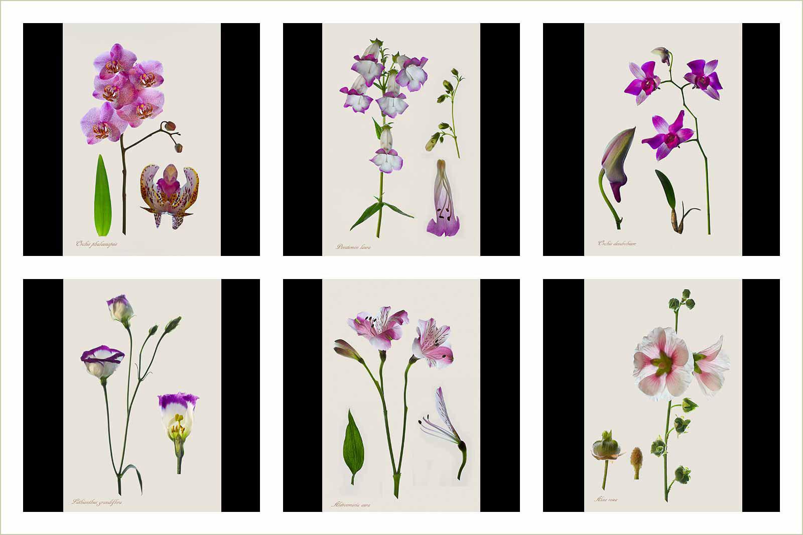 Ботанические принты: где искусство встречается с наукой, © Элеонора Коут, Золотая медаль категории «Портфолио», Фотоконкурс RHS Photographic