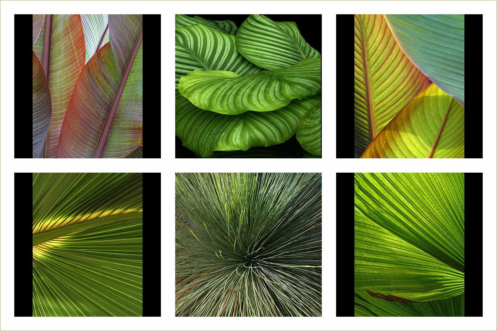 Абстрактные изображения сада Вислей, © Найджел Чепмен, Золотая медаль категории «Портфолио», Фотоконкурс RHS Photographic