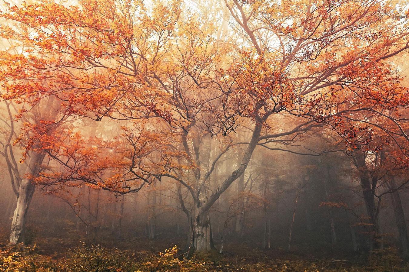 Босс, © Романа Рихова, 2 место в категории «Простые растения», Фотоконкурс RHS Photographic