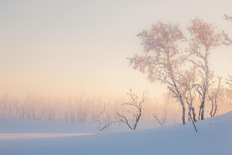 Арктическая береза, © Катаржина Низинкевич, 3 место в категории «Простые растения», Фотоконкурс RHS Photographic
