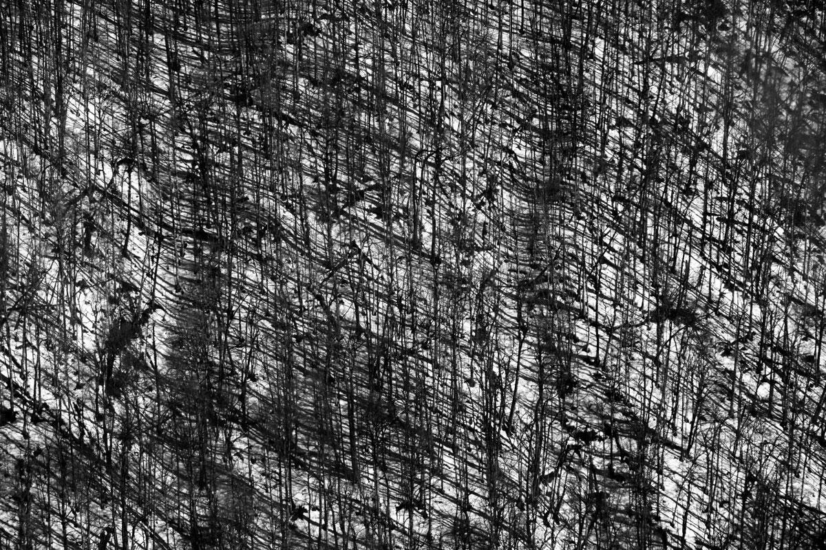 Структура леса, © Евгений Андреев, 3 место в категории «Абстракция», Фотоконкурс RHS Photographic
