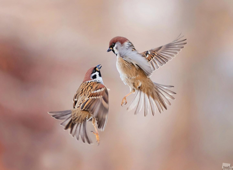 Глаза в глаза, © Наталья Бачкова, 2 место в категории «Сад дикой природы», Фотоконкурс RHS Photographic