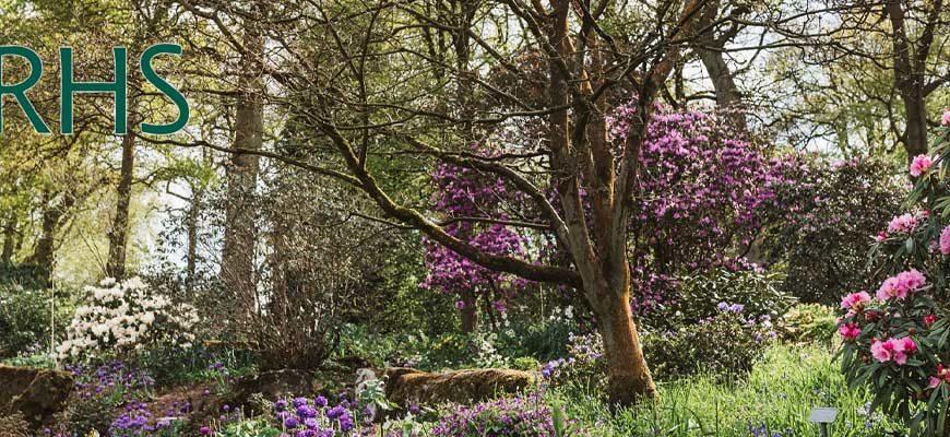 Фотоконкурс для любителей сада RHS Photographic