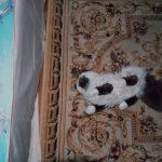 © Ксения Костомарова, проект Past Simple, Номинация «Арт проект», Специальный диплом жюри, Фотоконкурс «Род. Семья. Традиции»