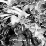 © Сергей Строителев, проект «Связь», Номинация «Документальный проект», Специальный диплом жюри, Фотоконкурс «Род. Семья. Традиции»