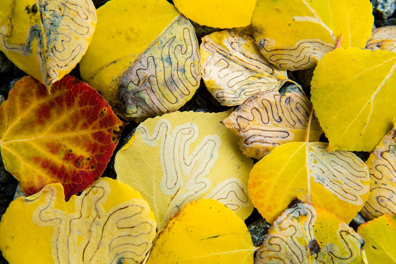 © Роберто Буэно, Тропы жизни, Фотоконкурс Королевского общества биологии — Royal Society of Biology