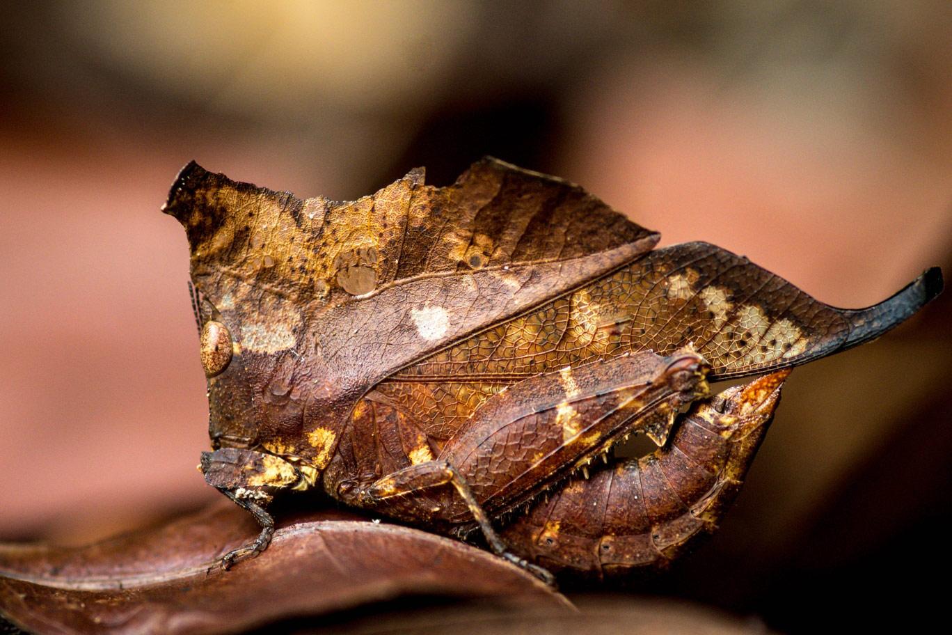 © Гильем Дуво, Мёртвый лист или нет, Фотоконкурс Королевского общества биологии — Royal Society of Biology