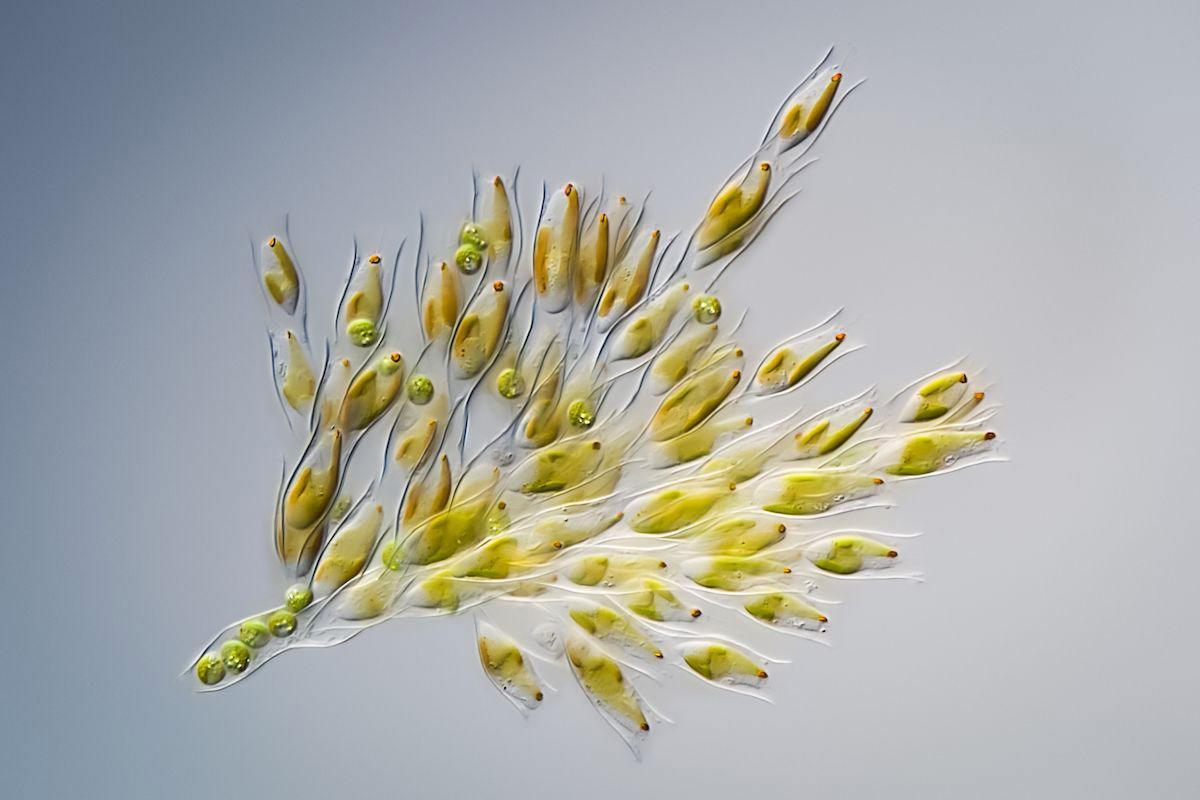 © Хакан Кварнстрем, Букет цветов, Фотоконкурс Королевского общества биологии — Royal Society of Biology