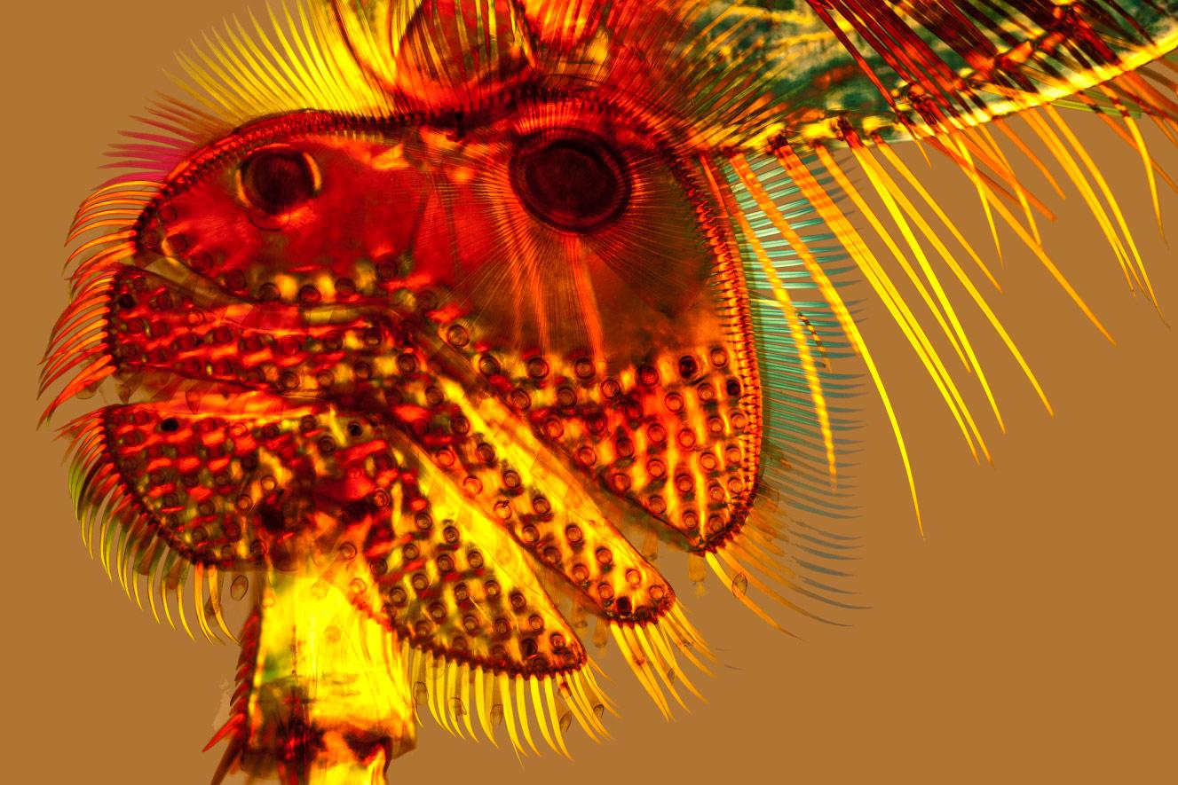 © Стив Лоури, Присоски на ноге у жука Dytiscus, Фотоконкурс Королевского общества биологии — Royal Society of Biology
