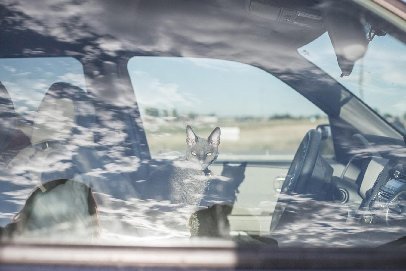 Кошка в машине из серии «Герцог Эрл», © Кристофер Бетелл, Великобритания, Золотая награда до 30 лет, Фотоконкурс RPS International Photography Exhibition (IPE)