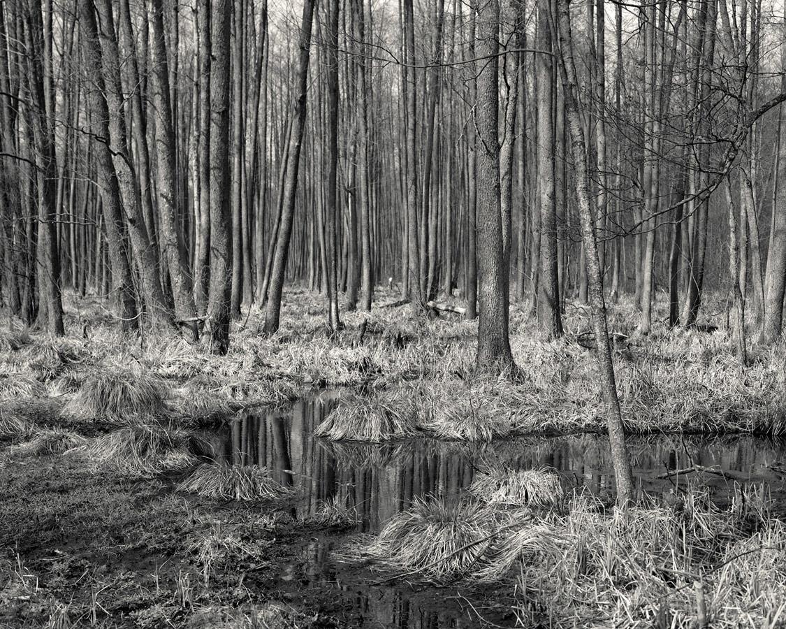 Грабарка. Из серии «Обет», © Элис Томлинсон, Великобритания, Серебряная награда, Фотоконкурс RPS International Photography Exhibition (IPE)