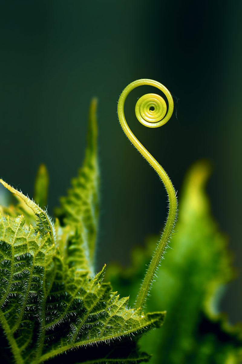 Чужой, ещё чужее..., © Дмитрий Салтыков, Победитель в категории «Природа», непрофессионал, Фотопремия IPA Россия