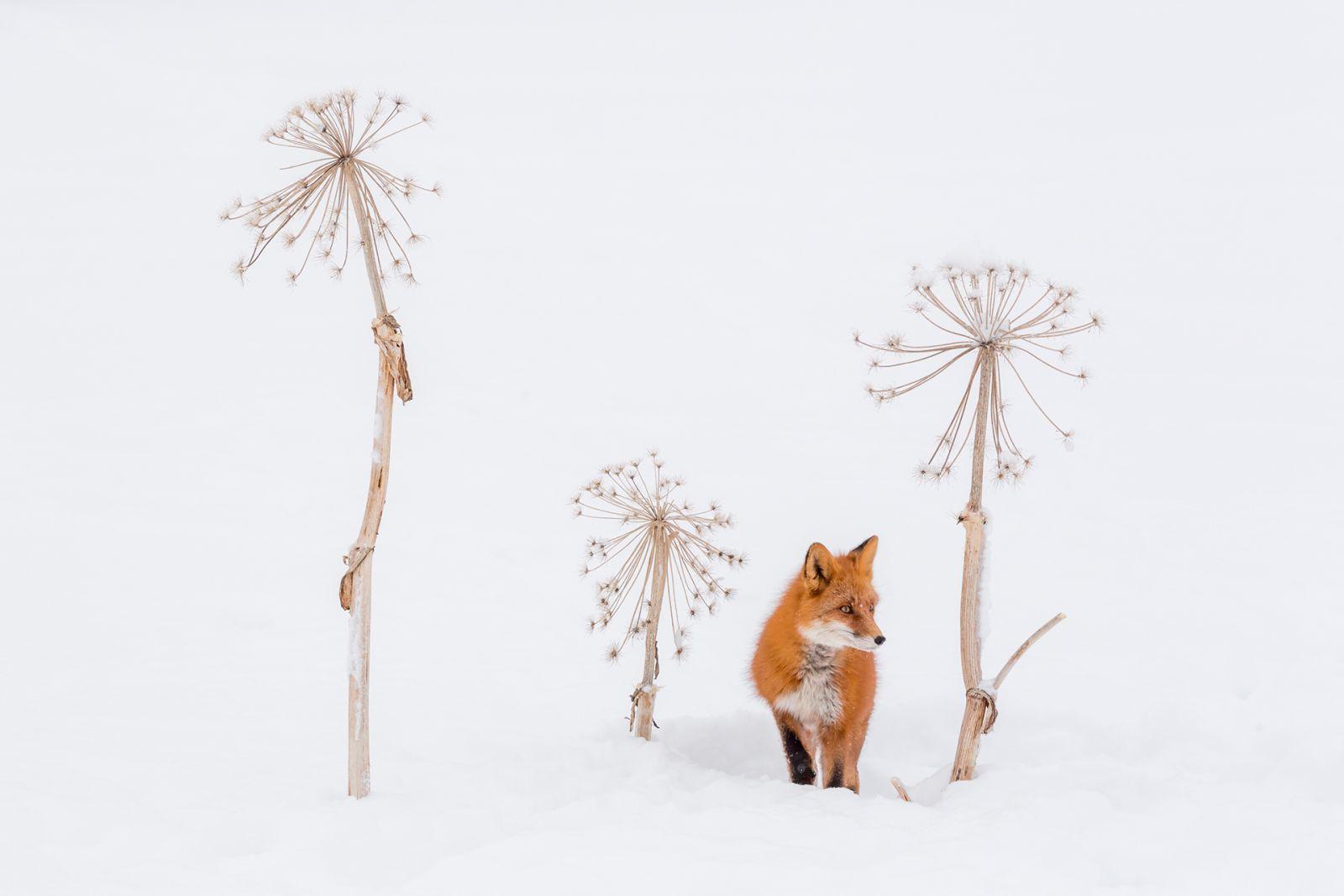 Спрятался, Денис Будьков, поселок Термальный, полуостров Камчатка, Номинация «Дикие животные», Фотоконкурс «Самая красива страна»