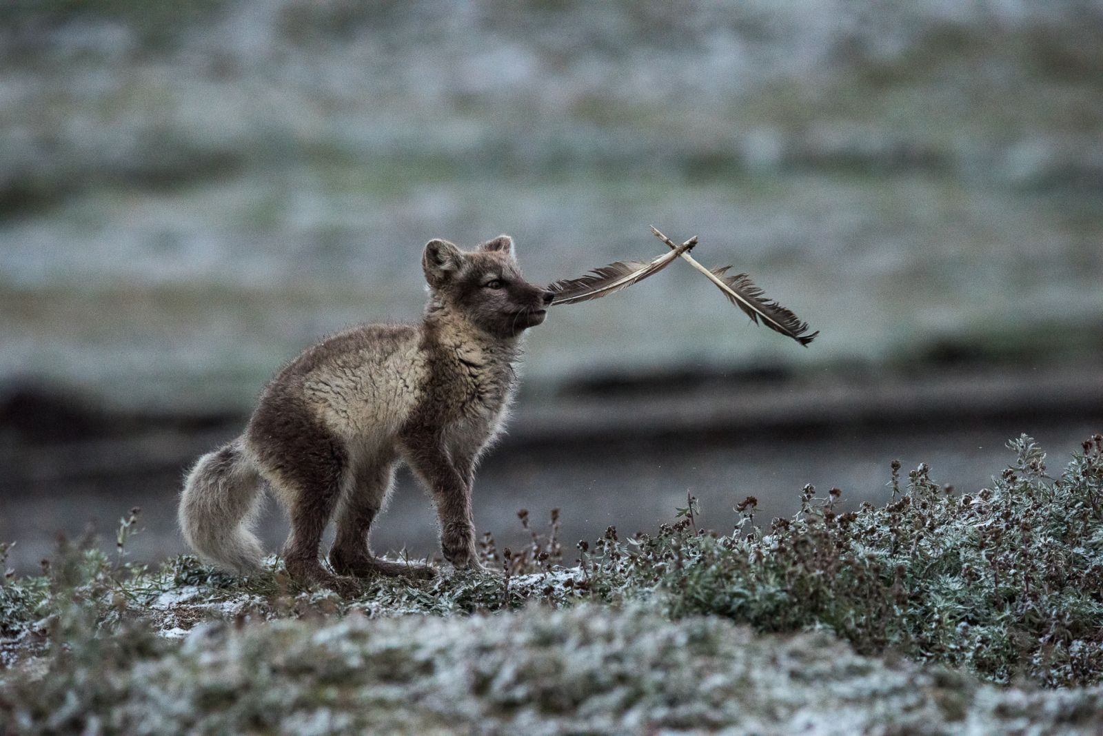 Простые игрушки, © Григорий Цидулко, Финалист фотоконкурса «Самая красивая страна – 2018»