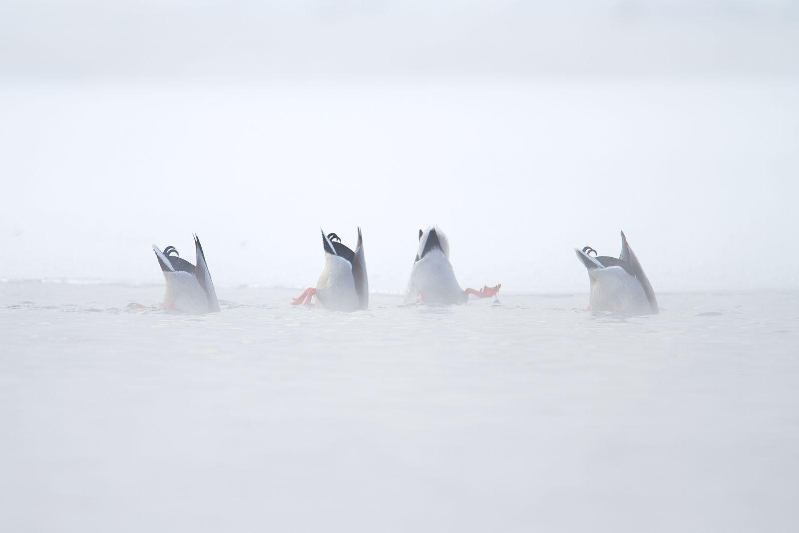 Обед, © Сергей Белых, Финалист фотоконкурса «Самая красивая страна – 2018»
