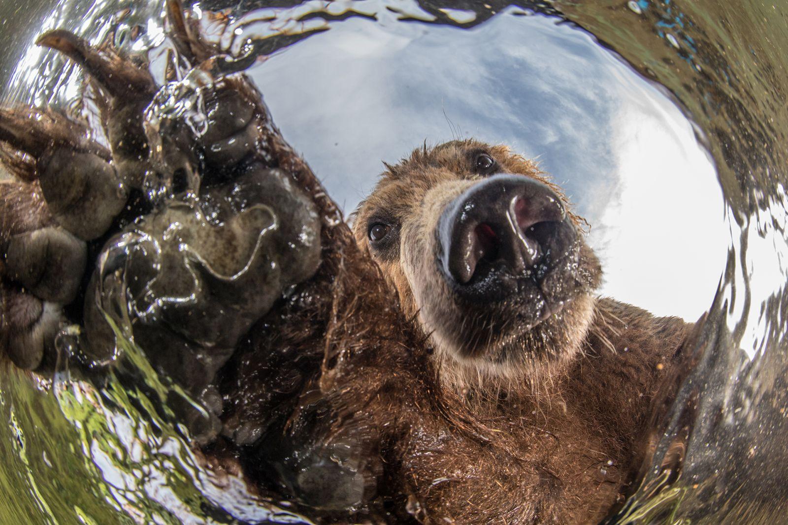 Любопытство, © Михаил Коростелёв, Финалист фотоконкурса «Самая красивая страна – 2018»