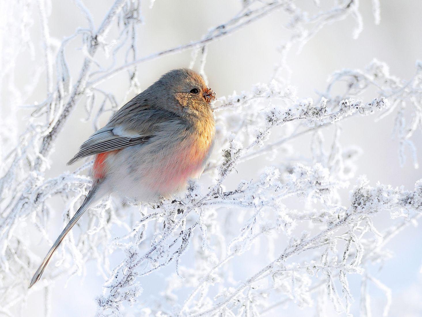 На зимнем лугу, © Владилен Зубарев, Финалист фотоконкурса «Самая красивая страна – 2018»
