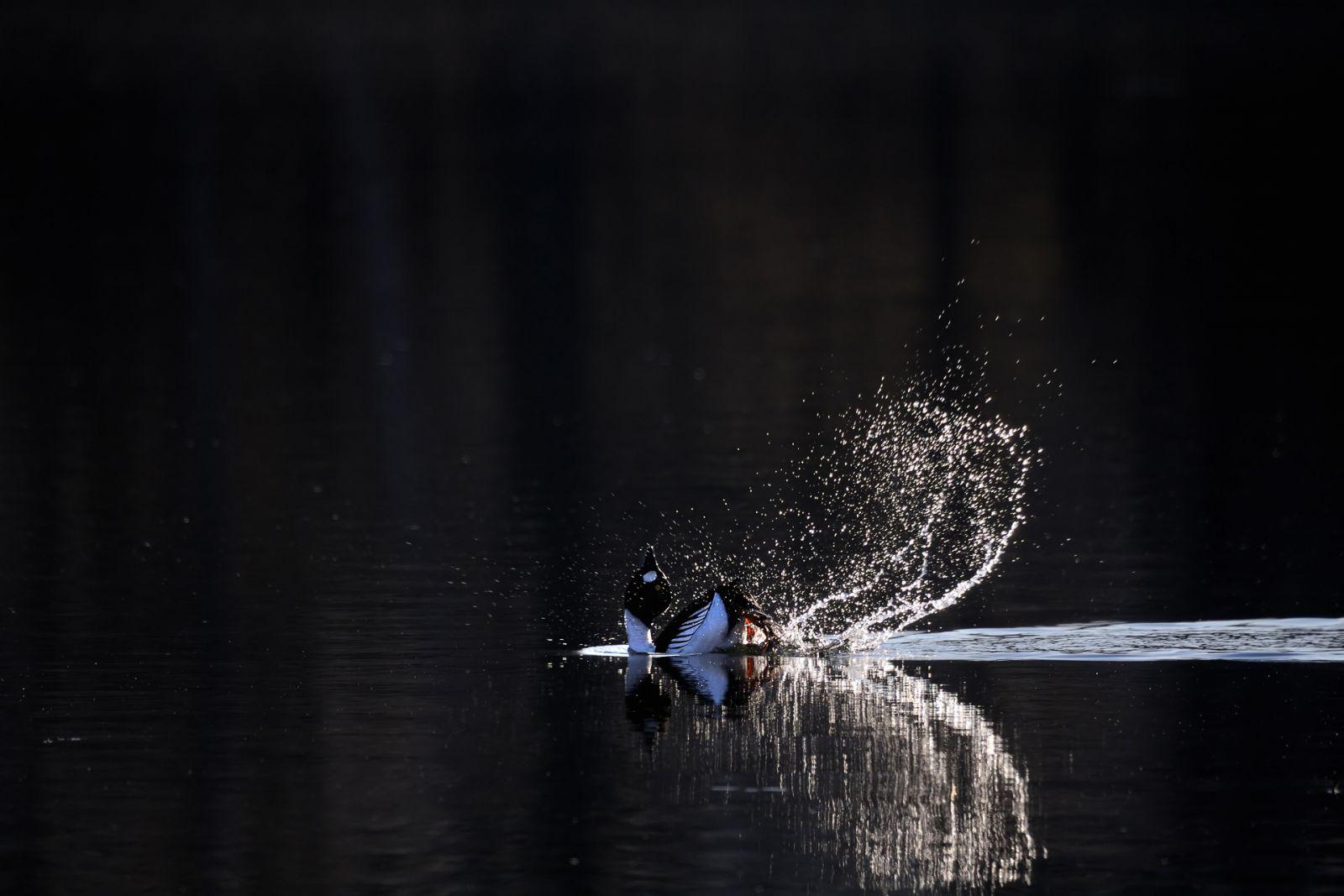Страсти по гоголю, © Виктор Тяхт, Финалист фотоконкурса «Самая красивая страна – 2018»