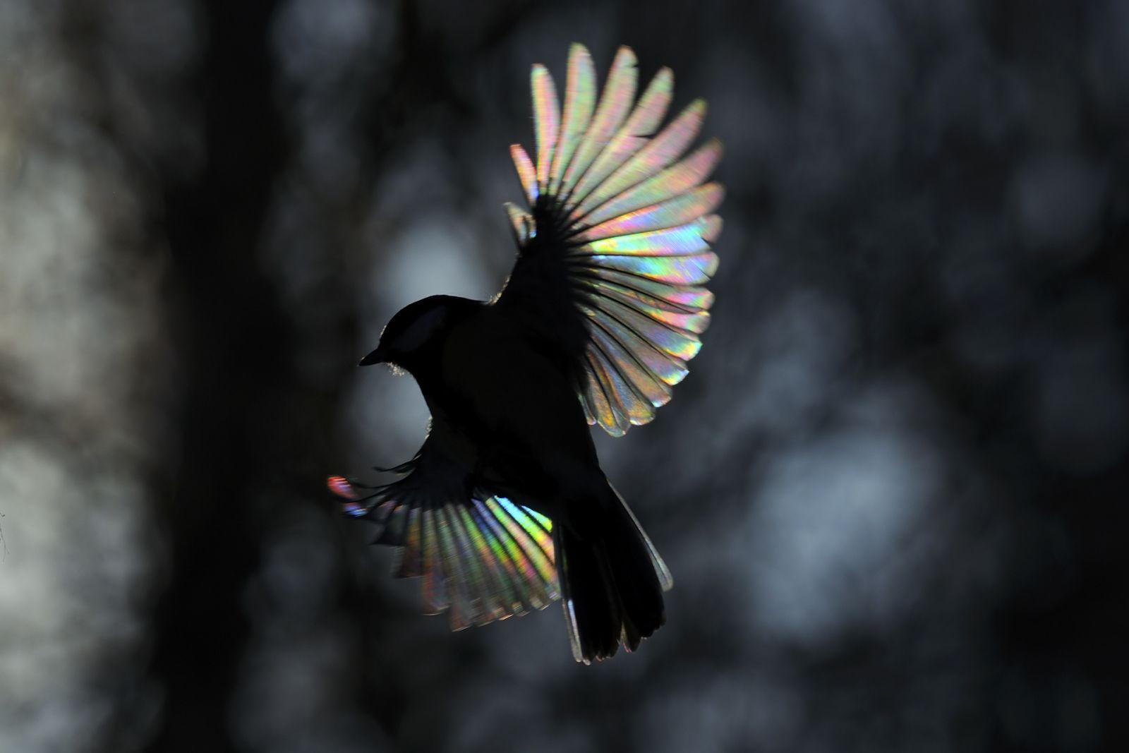 Жар-птичка, © Виктор Тяхт, Финалист фотоконкурса «Самая красивая страна – 2018»