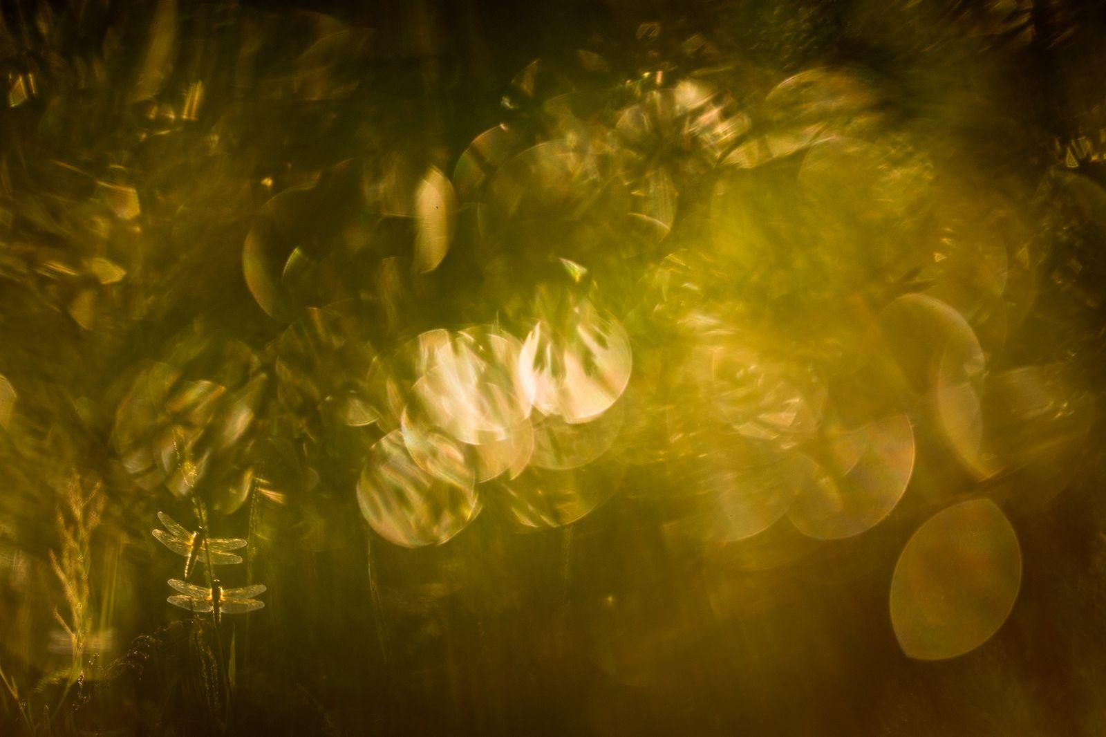 В стране эльфов, © Татьяна Нерикова, Финалист фотоконкурса «Самая красивая страна – 2018»
