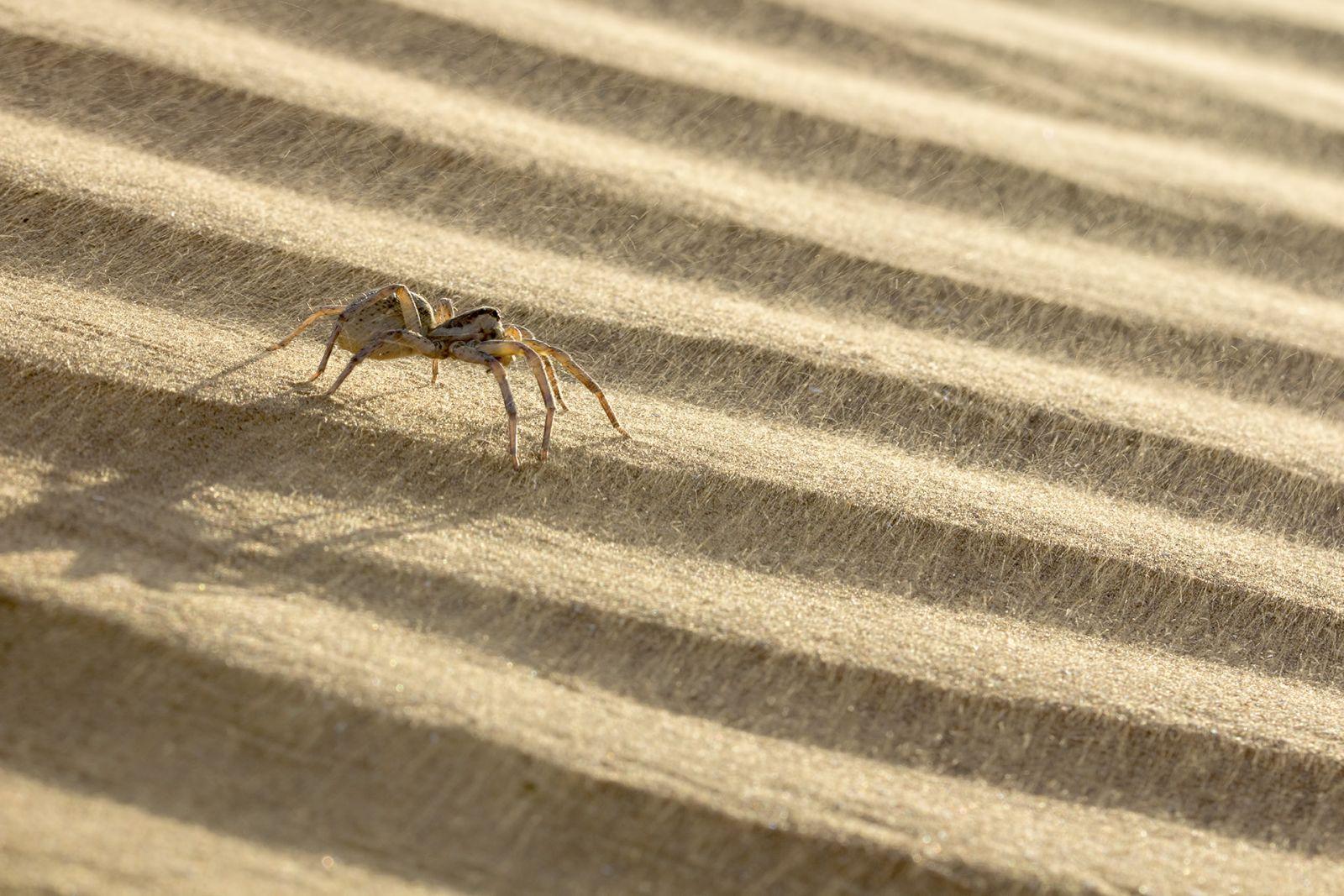 Долгая дорога в дюнах, © Станислав Шинкаренко, Финалист фотоконкурса «Самая красивая страна – 2018»