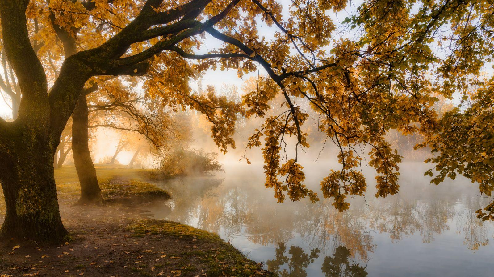 Про осень, свет и туман, © Александр Плеханов, Финалист фотоконкурса «Самая красивая страна – 2018»