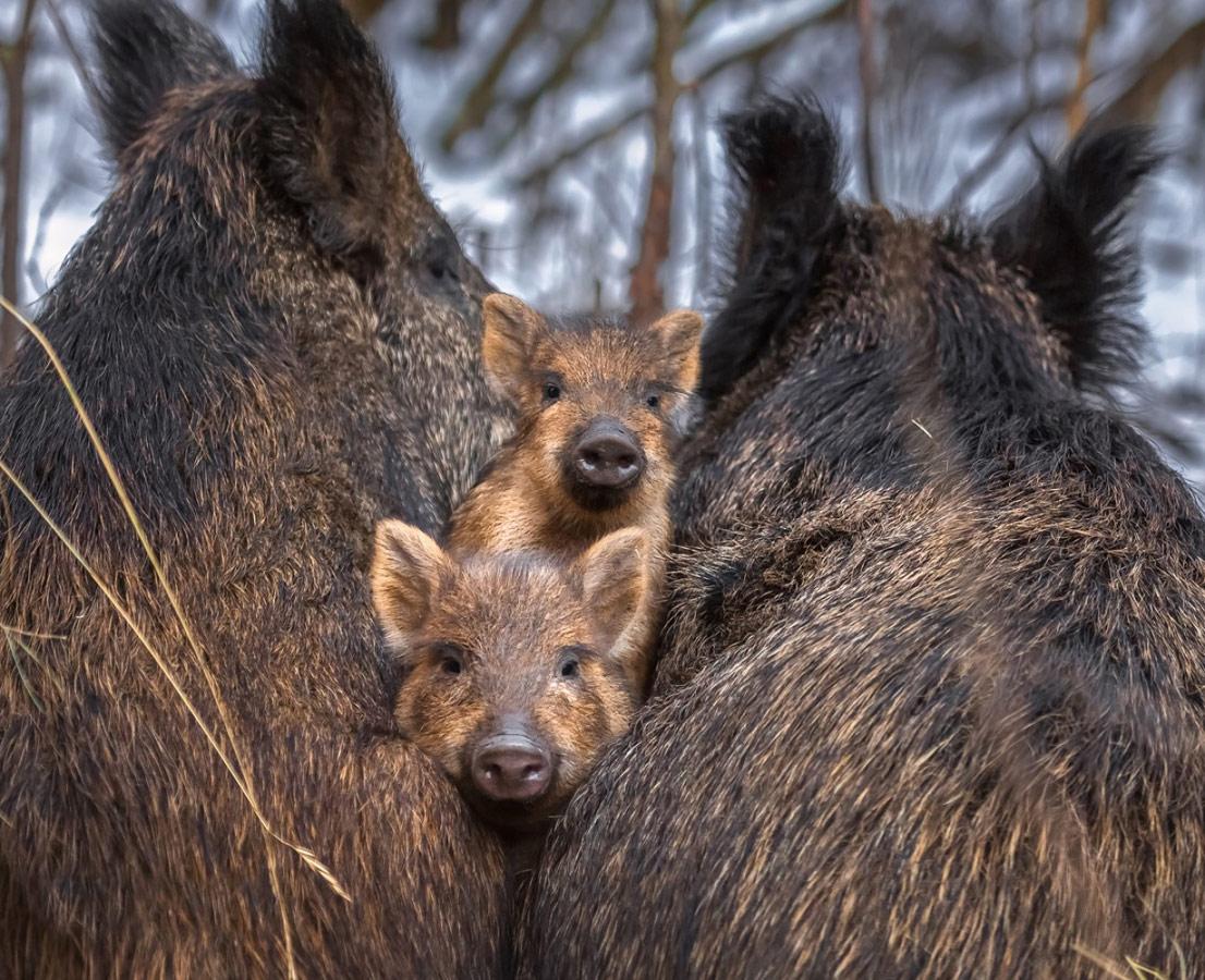 Маленькие защитники, © Фёдор Лашков