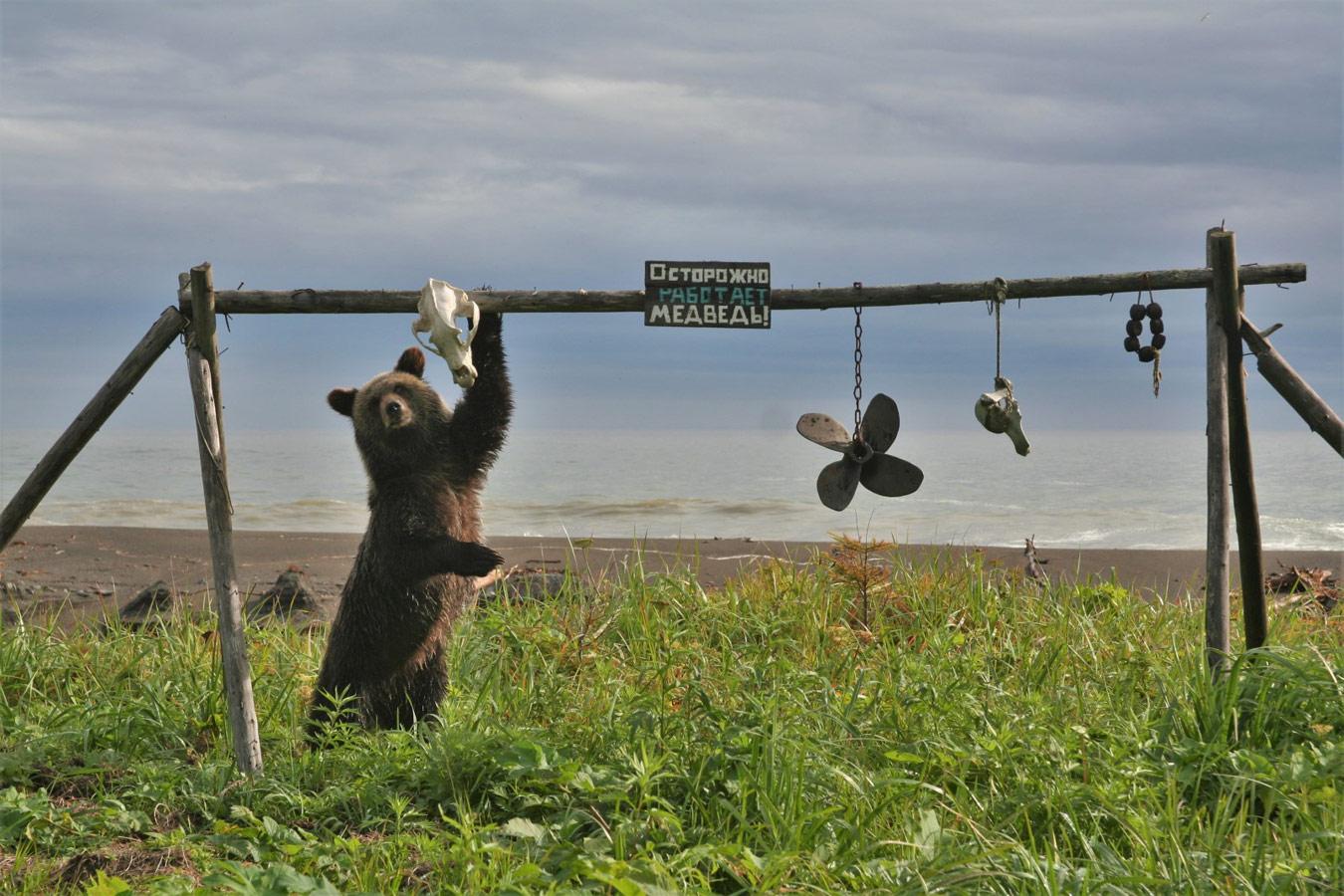 Осторожно, работает медведь!, © Александра Волкова
