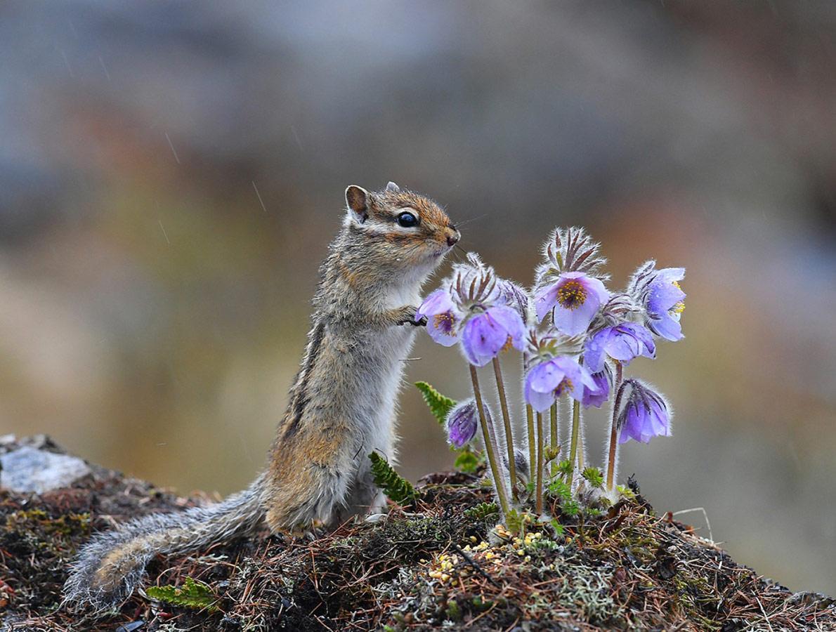 Пришла весна в Якутию, © Юрий Коковин