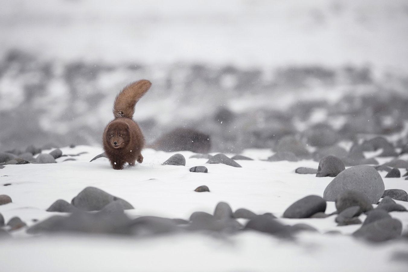 Снежные просторы Командор, © Алексей Перелыгин