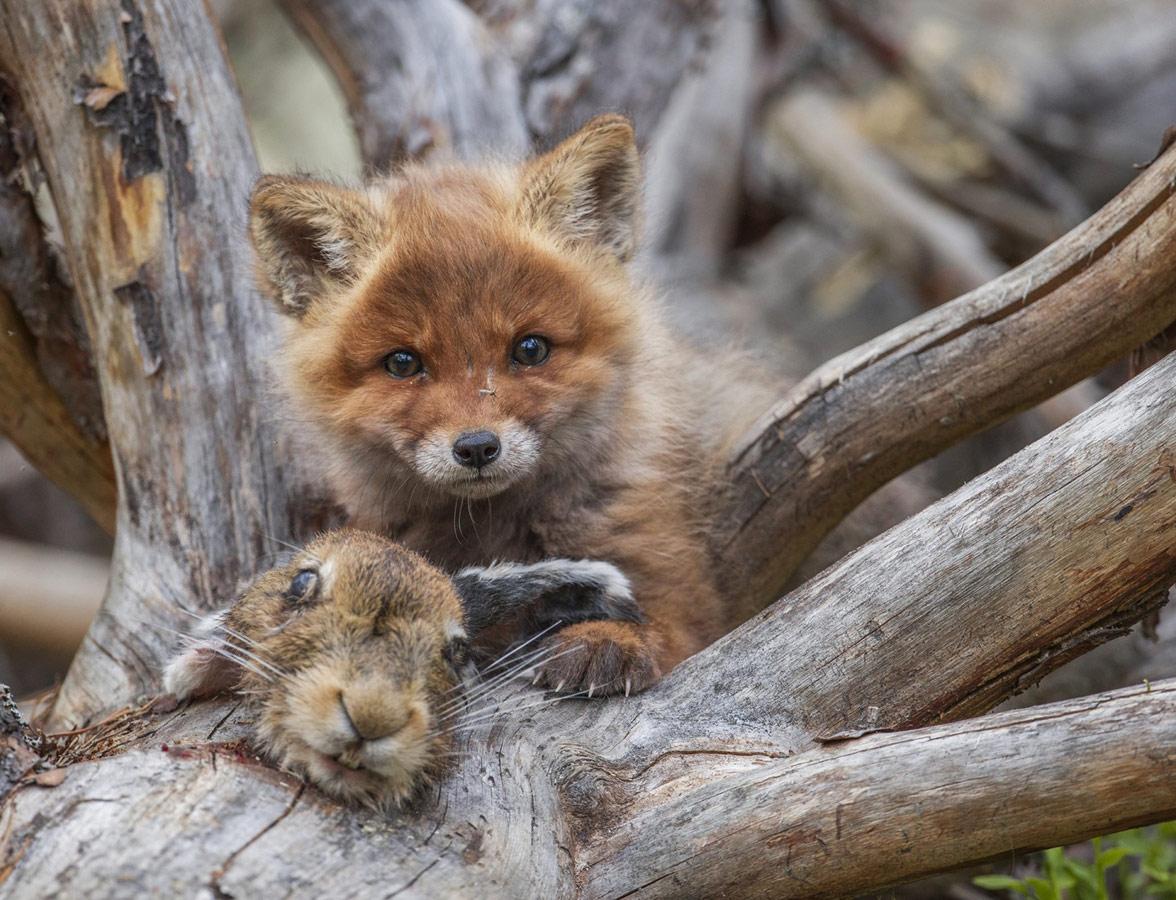 Маленький хищник, © Владислав Костылев