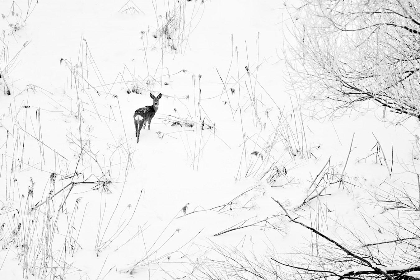 Зимы ждала, ждала природа, © Евгений Мазурин